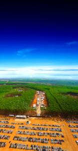Divulgação Expoforest