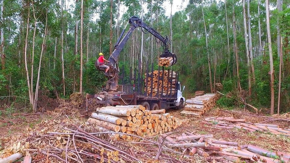 Florestal IMAP - Força e eficiência na movimentação de madeiras