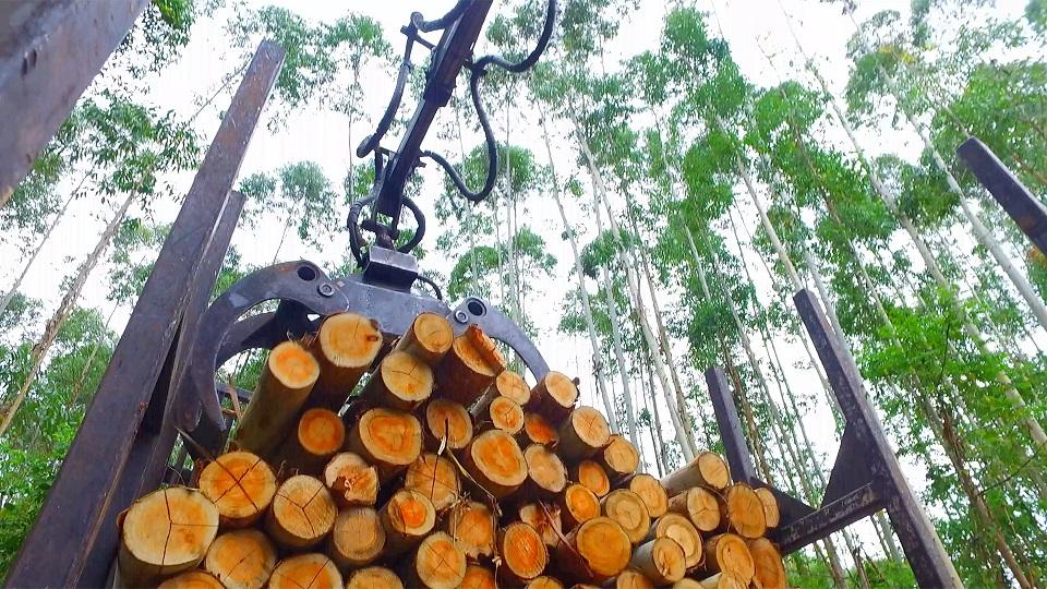 Garra Florestal - Força e eficiência na movimentação de madeiras