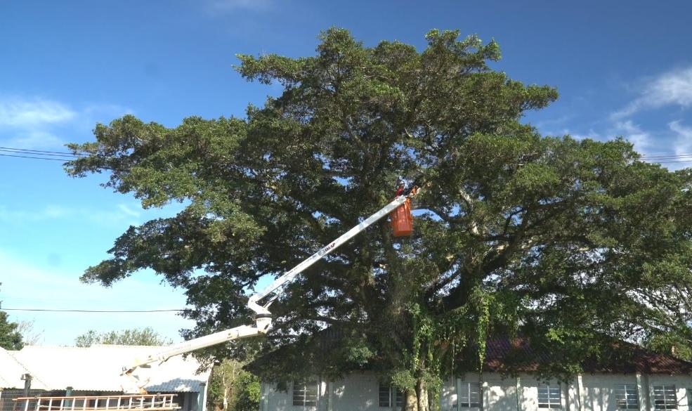 poda de árvore - [Case de Sucesso] Manutenção e arborização