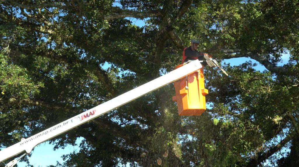 poda glorinha 1024x574 - [Case de sucesso] Podas de árvores na manutenção dos municípios